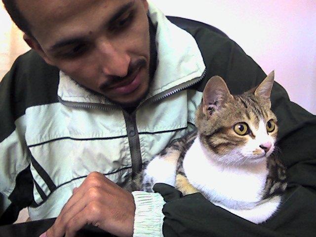 كرينكل والقط توتو